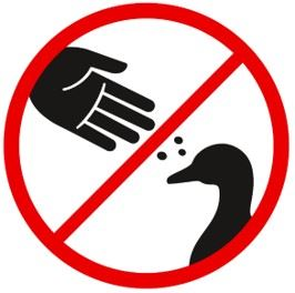 No feeding graphic