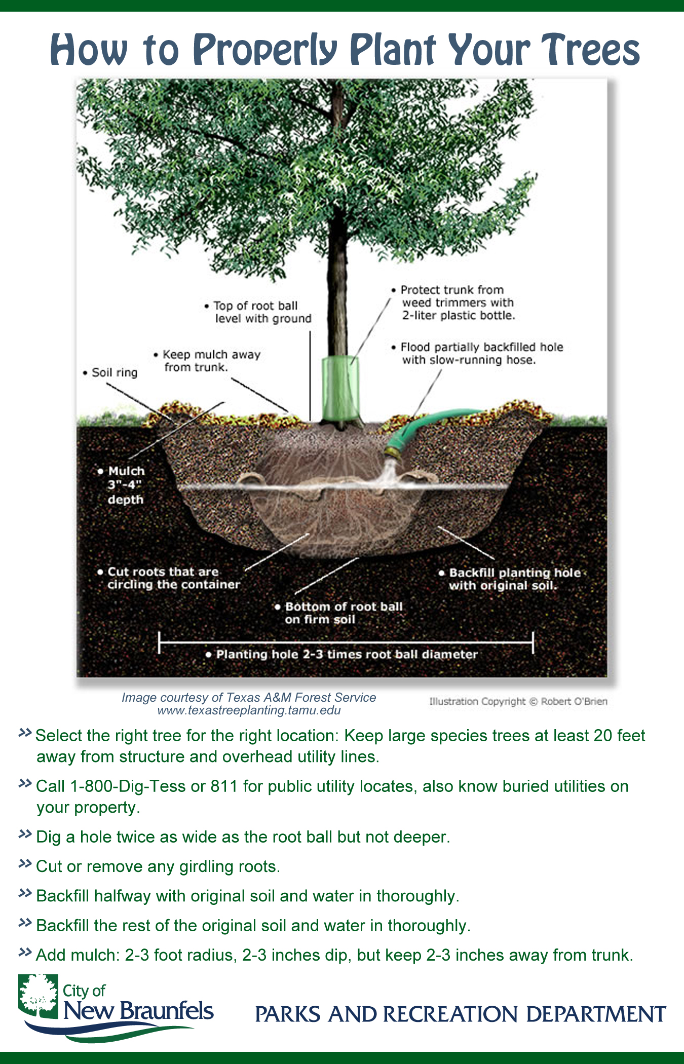 Tree Information Sheet back.jpg